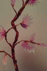 Magnolia silver