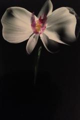 Orkide en A5