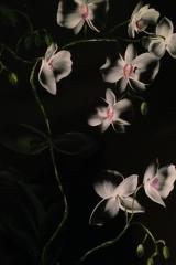 Orkide svart A3